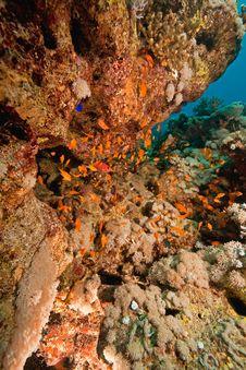 Free Coral And Fish Around Sha Ab Mahmud Royalty Free Stock Photography - 8940707