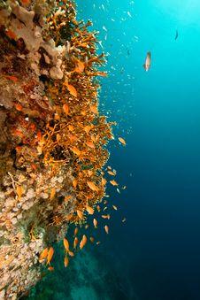 Free Coral And Fish Around Sha Ab Mahmud Stock Image - 8941141