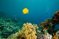 Free Coral And Fish Around Sha Ab Mahmud Stock Image - 8941551