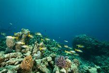 Free Coral And Fish Around Sha Ab Mahmud Stock Photo - 8942060