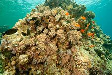 Free Coral And Fish Around Sha Ab Mahmud Stock Photography - 8942642