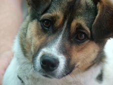 Free Dog Stock Photo - 8942680