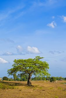 Free Lone Tree Stock Images - 8943884