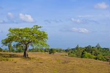 Free Lone Tree Stock Images - 8944144