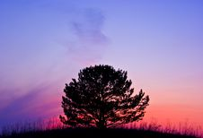 Free Tree At Sunset Stock Images - 8944864
