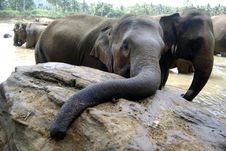 Free Curious Elephant Stock Photos - 8946143