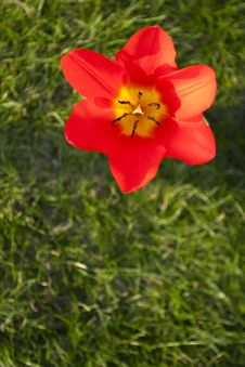 Free Spring Flower Royalty Free Stock Photos - 8946718