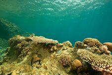 Free Coral And Fish Around Sha Ab Mahmud Stock Photos - 8949713