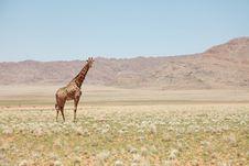 Free Giraffe Standing In Savanna Stock Photography - 89441682
