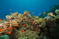 Free Coral And Fish Stock Photo - 8953940