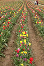 Free Family In Tulip Field Royalty Free Stock Image - 8959546