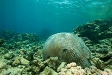 Free Coral And Fish Around Sha Ab Mahmud Stock Photo - 8950030