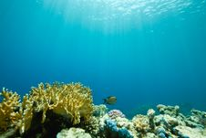 Free Coral And Fish Around Sha Ab Mahmud Stock Image - 8950111