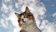 Free Cat And Clouds Royalty Free Stock Photo - 8950495