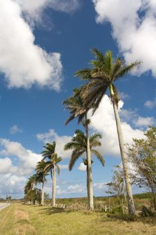 Free Palm Trees In A Side Of The Highway Stock Photo - 8951370