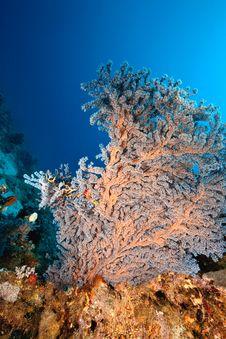 Free Coral And Fish Around Sha Ab Mahmud Stock Image - 8951461