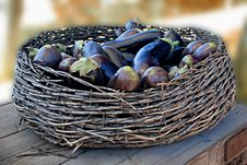 Free Eggplants Stock Photos - 8952103