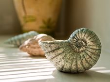 Crafted Seashells In Bathroom Royalty Free Stock Photography