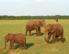 Free Elephant Family Stock Photos - 8952833
