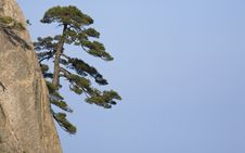 Free Pines In Sky Royalty Free Stock Images - 8953289