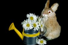 Free Bunny Bouquet Royalty Free Stock Images - 8953799