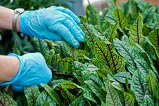 Free Plant Pruner Stock Photo - 8953830