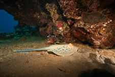 Free Coral And Bluespotted Stingray Stock Photo - 8954170
