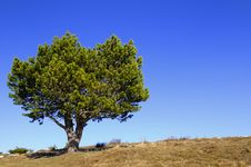 Free Lonely Tree Royalty Free Stock Photos - 8955028