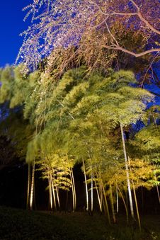 Free Bamboo Forest Stock Photo - 8955830