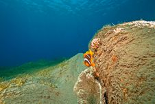 Free Ocean And Anemonefish Royalty Free Stock Image - 8956096