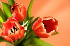 Free Flowers. Stock Photo - 8956770