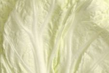 Free Leaf Of Celery Cabbage, Background. Royalty Free Stock Photography - 8956937