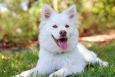 Free Portrait Of White Dog Outdoors Stock Images - 89507404