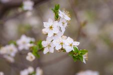 Free Spring Blooms On Branch Stock Image - 89507711