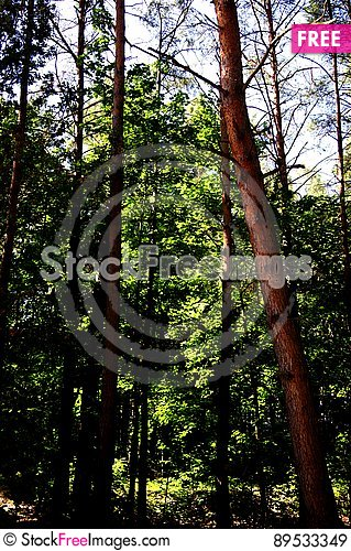 Free The Polish Forest Royalty Free Stock Images - 89533349