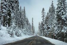 Free Trees Beside The Road Covered With Snow Royalty Free Stock Photo - 89569825