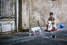 Free White Brown Short Fur Cat Walking Near Boy In Brown Black Short Sleeve Shirt Riding White Red Toy Stock Photos - 89570243