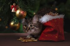Free Cat Sneaking Under Christmas Tree Royalty Free Stock Image - 89571076
