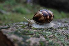 Free Snail On Ground Stock Photography - 89571222