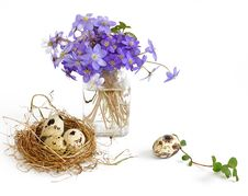 Free Eggs In Nest Royalty Free Stock Photos - 8961868