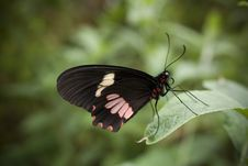 Free Butterfly Stock Image - 8962081