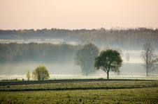 Free Trees In A Morning Fog Royalty Free Stock Photography - 8963347