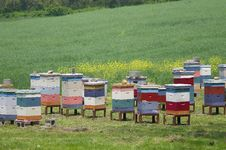 Bee Hives Royalty Free Stock Photo