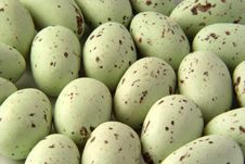 Free Seagull Eggs Stock Images - 8965434