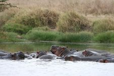 Free Hippos Stock Images - 8965464