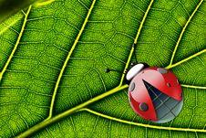 Free Ladybug Stock Photo - 8967550