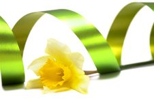 Yellow Daffodil Isolated Royalty Free Stock Photo
