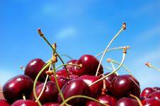 Free Wild Cherries Stock Photography - 8968302