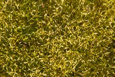 Free Abstract Mossy Background 2 Royalty Free Stock Images - 8968529