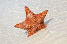 Free Starfish Stock Photography - 8969092